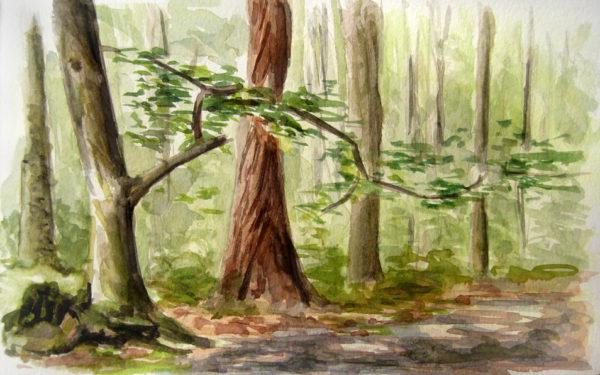 Spring inn the Hainich Woods